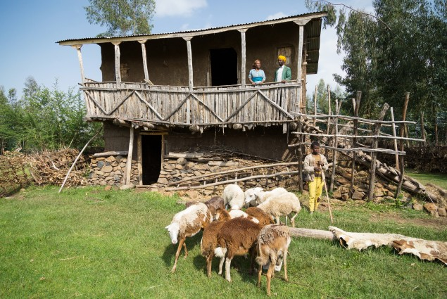 Misaye Akele and her husband Getachew Tadesse on the porch of their house. One of their sons, below, minds the sheep. Like many USAID beneficiaries, Misaye and Getachew feel that the greatest changes to their lives and livelihood have come about as a result of USAID's training on gender. By stepping out of traditional gender roles and working together, they are not only happier, but also better off. This year they put much of their extra income into building the family a new house.