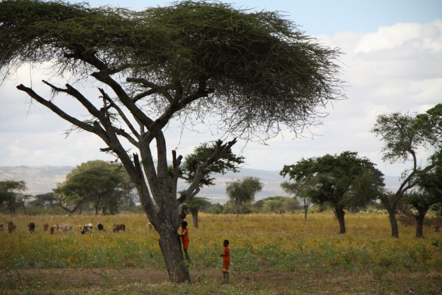 Boys in an Acacia Tree