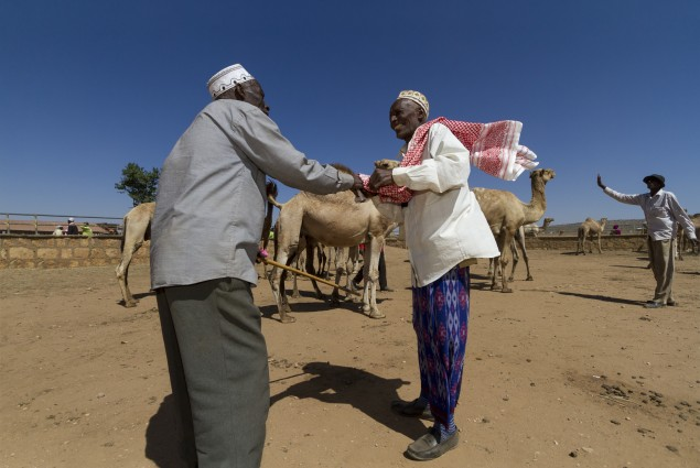 Camel Traders Finalize a Deal