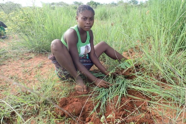 FOSA's primary focus is on reforestation, which they do by collecting seeds and establishing forest nurseries.