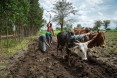 USAID beneficiaries Hebisu Kabeto and his wife Adanech Abziger plow their field together.