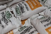 Pioneer Maize Seed Ready for Shipment