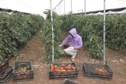 Already, small-scale Palestinian farmers are increasing shipments of fresh vegetables to Eastern Europe and Russia.