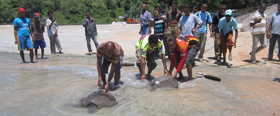 Residents of Com village in eastern Timor-Leste release two turtles captured by fishers.