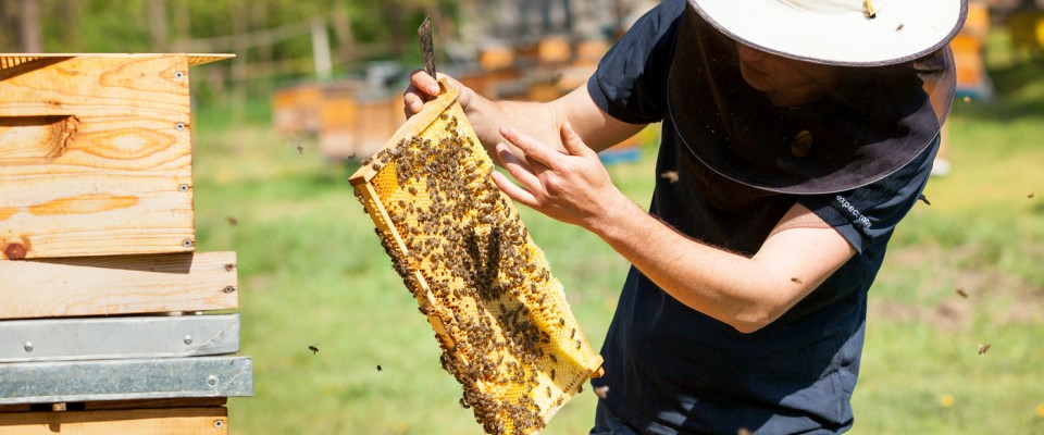 Beekeeping is a traditional and widespread occupation in Moldova, yet many beekeepers do not operate as a business. USAID is assisting Moldovan producers in transforming the honey sector from hobby to business.