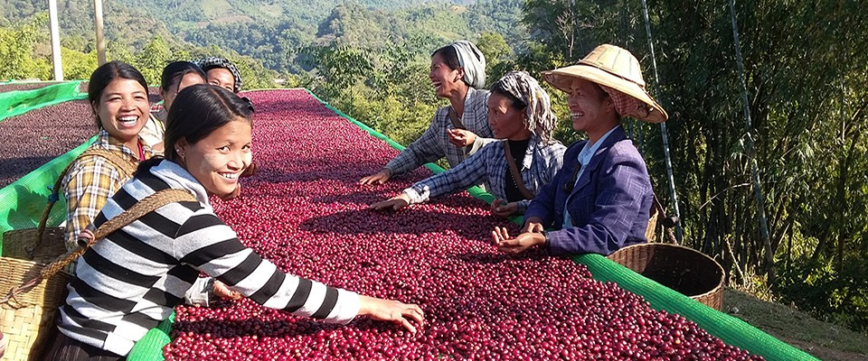 Burma - coffee farmers