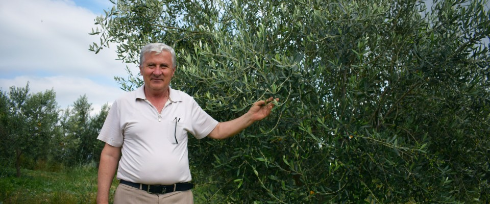 Man stands next to an olive tree