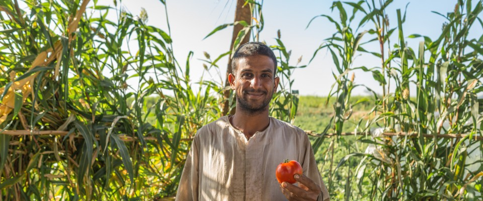 Egyptian farmers improve crops, sell to new markets and increase incomes