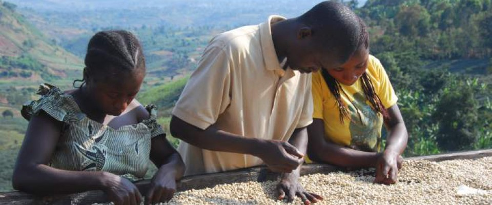 The DRC's Coffee Might Be Served at a Starbucks Near You. Patrick Smith, USAID