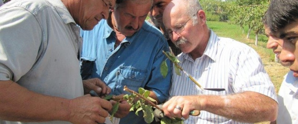 U.S. agricultural volunteers share their experience pruning and grafting fruit trees with Tajik farmers.
