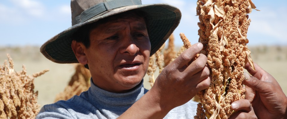 Support to quinoa producers- USAID works with rural producers in Bolivia to improve their crops, access new markets and allow th