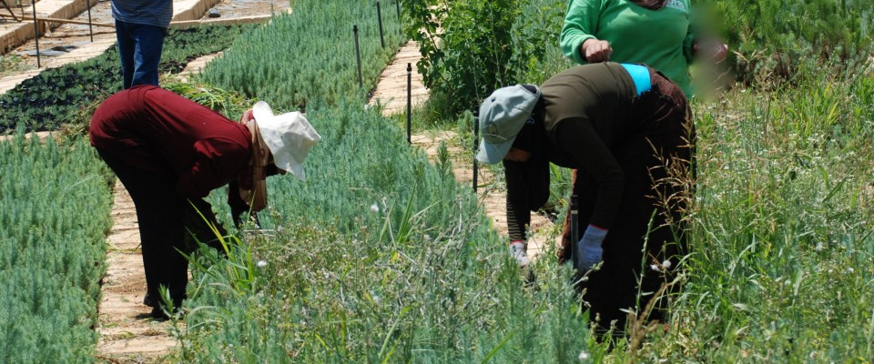 USAID assists the agriculture sector in Lebanon.
