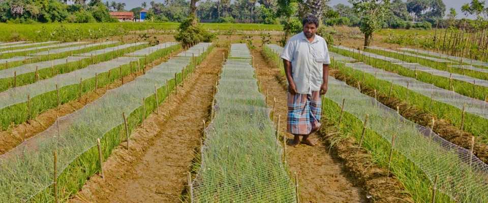 A small scale onion farmer restores his livelihood with assistance from USAID