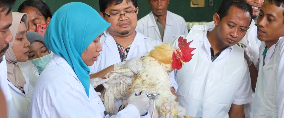 USAID partners with Indonesian organizations to provide bird flu prevention training to Indonesia.