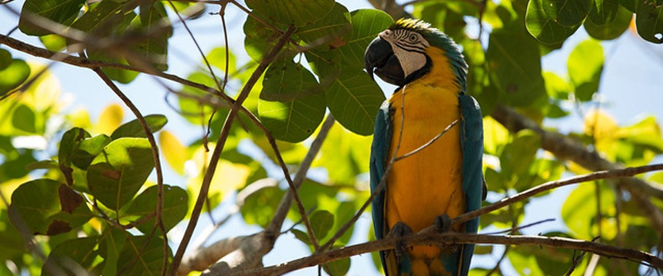 Biodiversity Conservation is the utmost goal for USAID/Brazil.  Photo: Bruno Kelly – USAID/Brazil