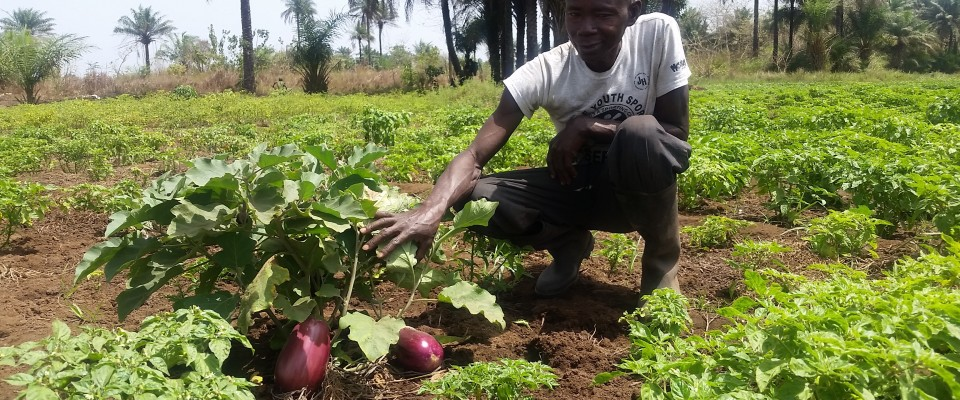 USAID is working with the Government of Guinea to make Agriculture an attractive sector to retain young people.
