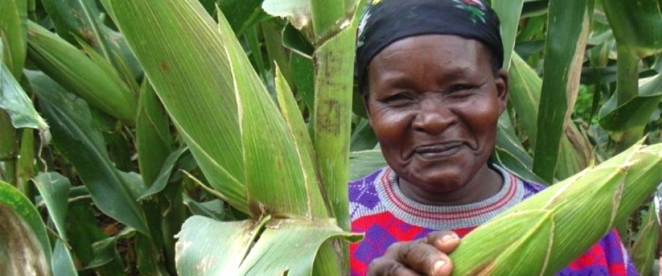 USAID helps smallholder farmers like this one, who grows corn