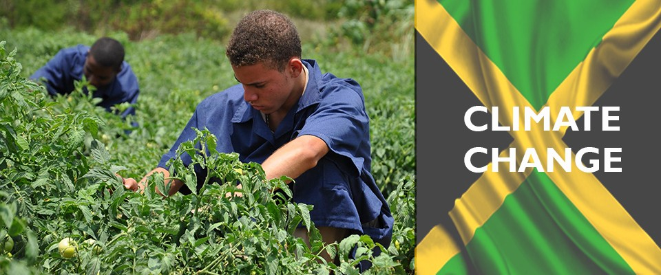 Climate Change - Boosting Climate Smart Agriculture in Jamaica