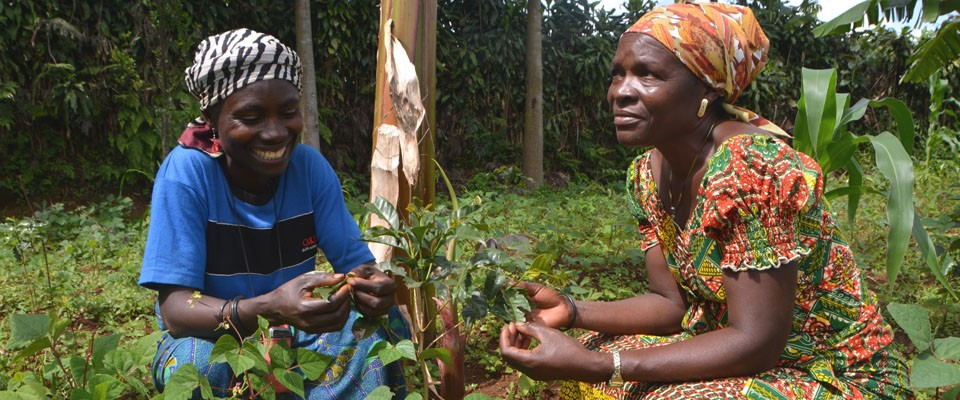 Jeannine Balagizi, left, and fellow farmer Beatrice Cibalonza M'Nyabahara grow beans among their coffee trees.