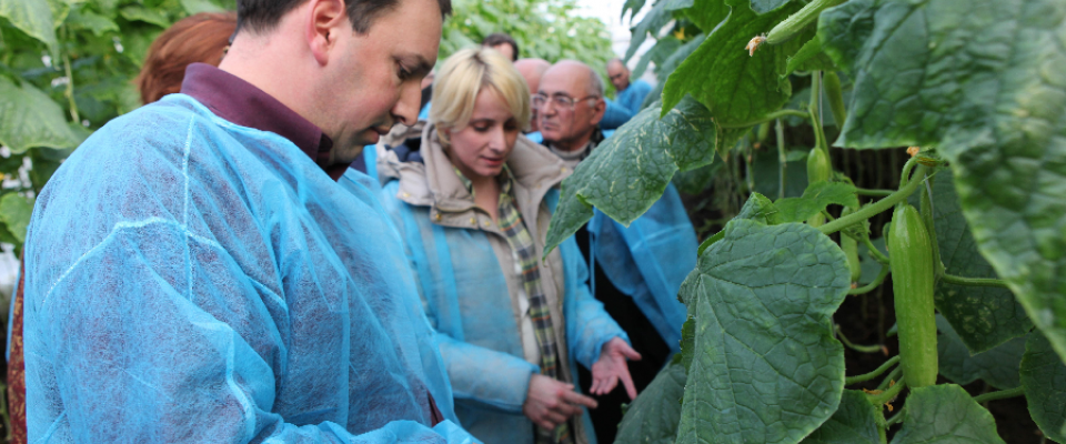 USAID programs are strengthening Georgia's greenhouse vegetable production