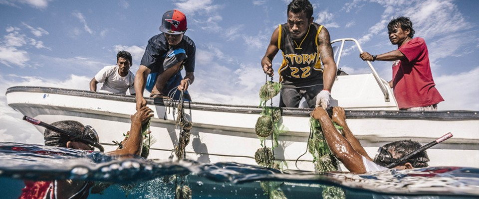 $1.6 million of global financing was mobilized to help boost the environmental resilience of Pacific Island countries.