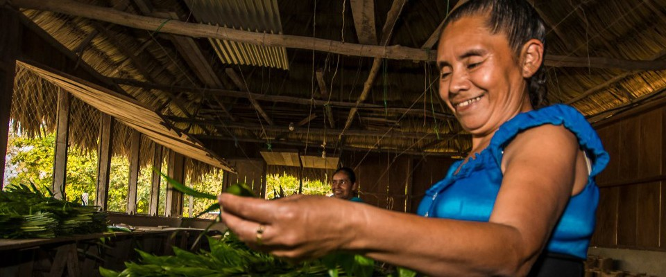 Photo of Jorge Soza, who works in Guatemala's northern Peten and  is the centerpiece of the largest block of broadleaf tropical forest in Mesoamerica  Photo by: Concesiones Forestales