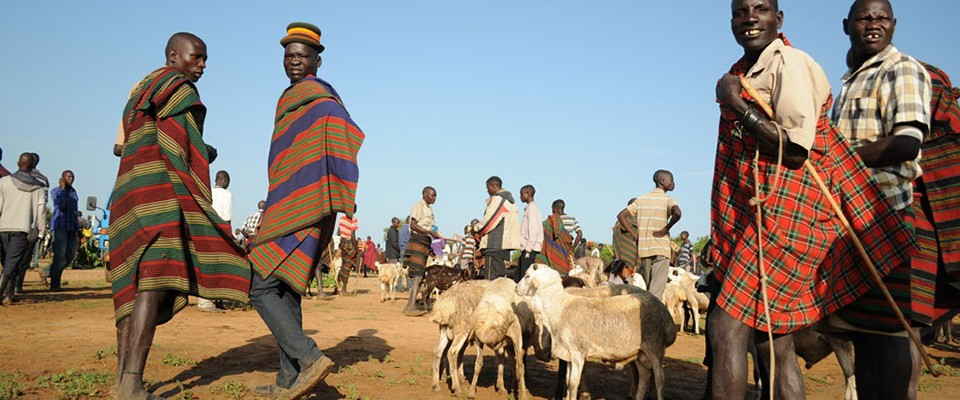 Improving resilience in vulnerable communities by building the livestock value chain.