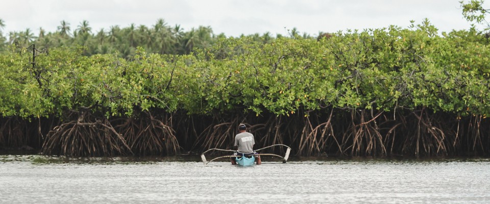 World Oceans Day-Mangroves