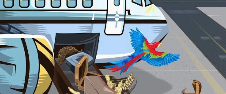 A cartoon of an airplane with various animals coming out of the cargo area