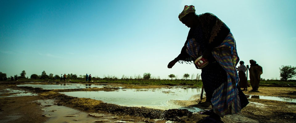 A woman in Senegal sows seeds