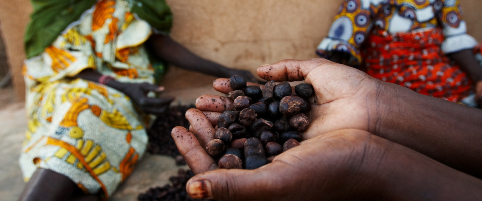 A handful of shea nuts at a market