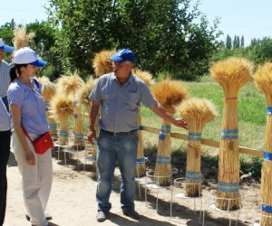 Farmers at a demonstration plot in Kostanay