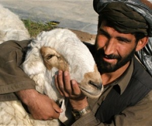 A Kuchi nomadic herder at a USAID training in livestock veterinary care.