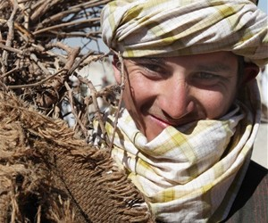A USAID project is providing jobs and more than 1 million fruit tree saplings to beneficiaries in southern Afghanistan