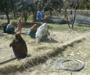 Women weaving gabion in Pachir Wa Agam district