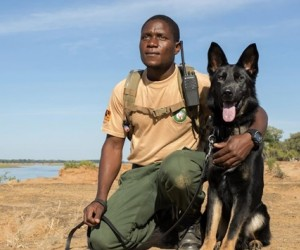 Game ranger Peter Tembo with his partner, Lego. Part of the USAID-funded Canine Detection Team fighting wildlife trafficking in Zambia's Lower Zambezi National Park. Photo courtesy of Conservation Lower Zambezi.