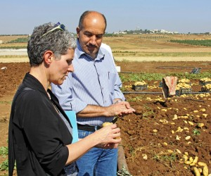 A Palestinian farmer explains to USAID's Mara Rudman the difference between regular potatoes and those grown for Al Salam