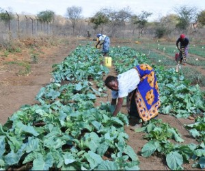 Farmers tend their crops as part of the USAID and WFP project in Kathemboni.