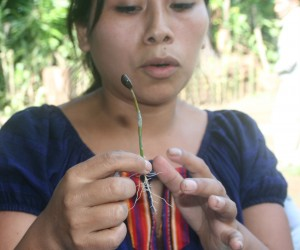 Rosita Juárez demonstrates grafting disease-resistant coffee seedlings