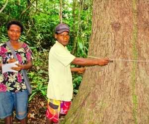 Two Urumarave villagers measure a tree in the conservation area of their village in Papua New Guinea.