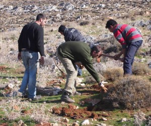 Image of Lebanese youth preparing plants