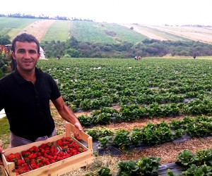 Bumper crops of strawberries have two first-time entrepreneurs reeling in profits — and eyeing expansion thanks to USAID
