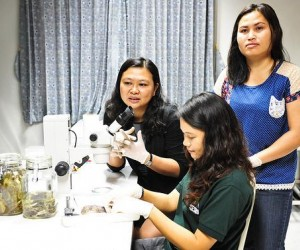 Anchalee Aowphol (left) advises students Somphouthone Phimmachak (right) and Korkhwan Termprayoon (center) as they examine gecko