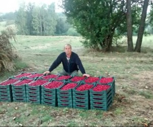 Raspberry Farming Builds Wealth for Family