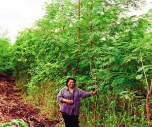 Toom Sumpaoporka stands next to one of her many leucaena trees on the family farm in Lopburi, Thailand.