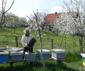 Bees brought sweet successes