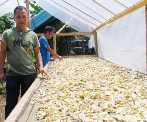 Small-scale Cassava Growers Earn Big in the Philippines