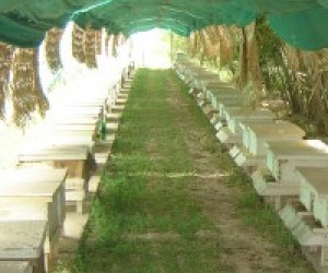 Beekeeper Ali Hussain Heremish founded this apiary with support from the USAID-funded Community Action Program, which helps Iraq