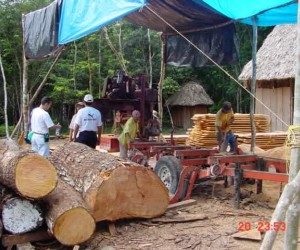 Petén community members harvest and prepare mahogany for shipping.