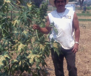 Ricardo Sosa, president of his community farmer association, surveys crops that now earn farmers 80 percent more income